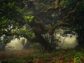 Anke Butawitsch, dark forest (Portugal, Europe)