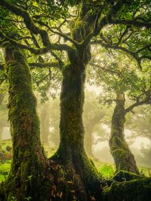 Anke Butawitsch, breezing the green (Portugal, Europe)