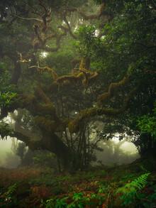 Anke Butawitsch, mystical forest (Portugal, Europe)