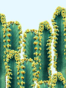 Uma Gokhale, Adorned Cactus (Indien, Asien)