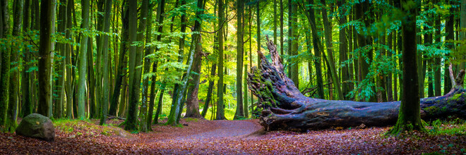 Martin Wasilewski, Beech Forest in Germany (Germany, Europe)
