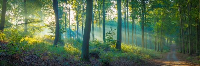 Martin Wasilewski, Beech Forest Panorama (Germany, Europe)