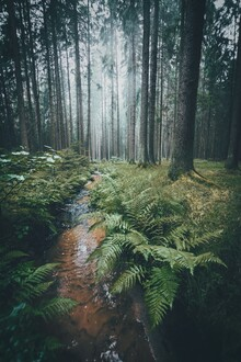 Patrick Monatsberger, Im Wald (Deutschland, Europa)