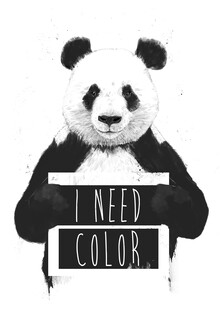 Balazs Solti, I need color (Ungarn, Europa)