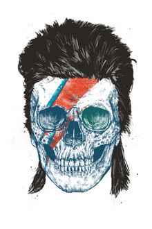 Balazs Solti, Bowie's skull (Hungary, Europe)