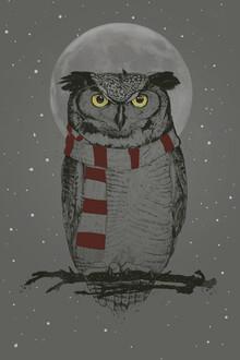 Balazs Solti, Winter owl (Hungary, Europe)