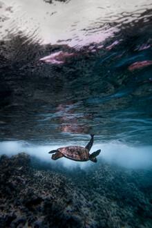 Tobias Winkelmann, Turtle mood (United States, North America)