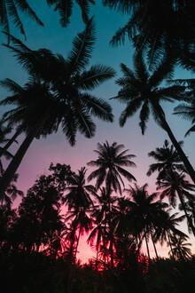 Tobias Winkelmann, Sonnenuntergang Palmen (Indonesien, Asien)