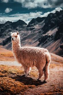 Tobias Winkelmann, Alpaca Fluff (Peru, Latin America and Caribbean)