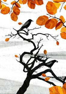 Katherine Blower, Crows (Großbritannien, Europa)