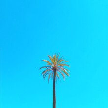 Kirill Voronkov, Palm Tree (Italy, Europe)