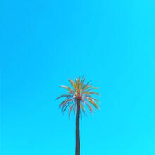 Kirill Voronkov, Palm Tree (Italy, Europe)