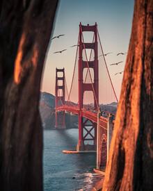 Dimitri Luft, framed bridge (Vereinigte Staaten, Nordamerika)