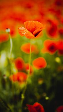 Nicklas Walther, Blossom (Deutschland, Europa)