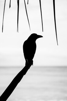 Nicklas Walther, Blackbird (Sri Lanka, Asien)