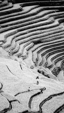 Nicklas Walther, Ricefield (Vietnam, Asien)