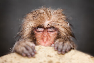 Jan Becke, Japanese snow monkey relaxes while bathing (Japan, Asia)