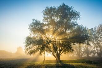 Martin Wasilewski, Autumn Light Tree (Germany, Europe)