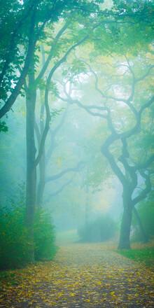 Martin Wasilewski, Nebel im Park (Deutschland, Europa)