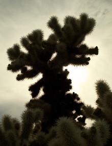Aurica Voss, Joshua Tree (Vereinigte Staaten, Nordamerika)