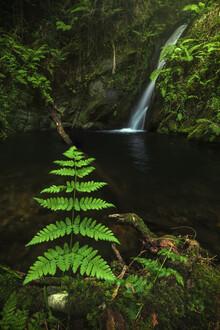 Jean Claude Castor, Asturias Waterfall Cascada Gorgollon with fern (Spain, Europe)