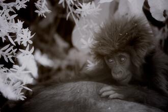 Nicole Cambré, Titus baby (Ruanda, Afrika)