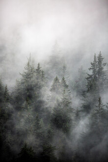 Foggy Morning 1 - Fineart photography by Mareike Böhmer