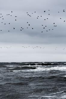 Mareike Böhmer, Birds and the Sea (Denmark, Europe)