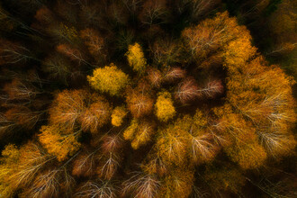 Giedra Bartas, Autumn forest (Litauen, Europa)