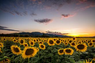 Nicklas Walther, Sunflower (Italien, Europa)