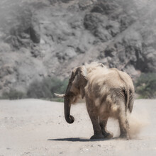 Dennis Wehrmann, Wüstenelefant Hoanib Flußbett Namibia (Namibia, Afrika)