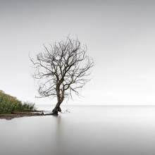 Trasimeno Tree | Umbrien - fotokunst von Ronny Behnert