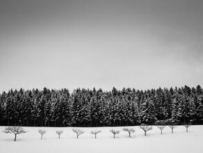 Bernd Grosseck, Baumreihe im Winter (Österreich, Europa)