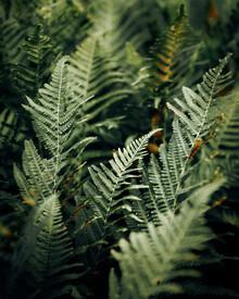 Nicklas Walther, Green leaf (Slowenien, Europa)