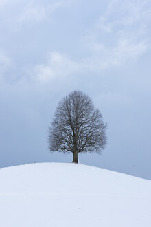 Thomas Staubli, Lindenbaum im Winter (Schweiz, Europa)