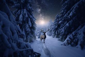 Oliver Henze, Einsamer Hirsch in einer Winternacht (Deutschland, Europa)