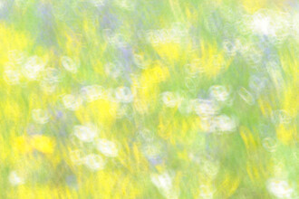 Frühlingswiese - fotokunst von Rolf Schnepp