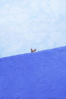 Spy Cat - fotokunst von Rupert Höller