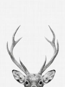 Vivid Atelier, Deer (Großbritannien, Europa)