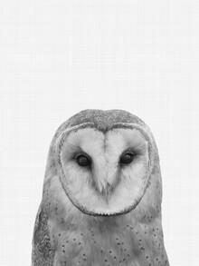 Vivid Atelier, Owl (Großbritannien, Europa)