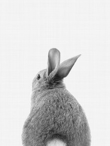 Vivid Atelier, Rabbit Tail (Black and White) (United Kingdom, Europe)