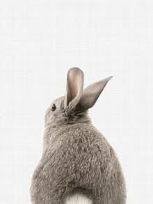 Vivid Atelier, Rabbit Tail (Großbritannien, Europa)