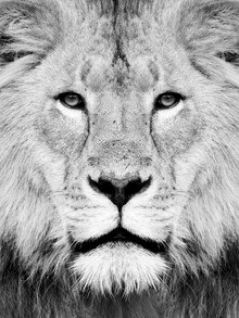 Vivid Atelier, Lion Photography (Großbritannien, Europa)