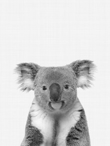 Vivid Atelier, Koala (Black and White) (United Kingdom, Europe)