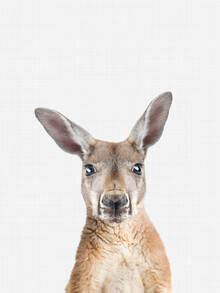 Vivid Atelier, Kangaroo (Großbritannien, Europa)