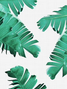 Vivid Atelier, Tropical Leaves (United Kingdom, Europe)