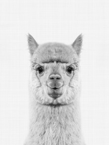 Vivid Atelier, Alpaca (Black and White) (Großbritannien, Europa)