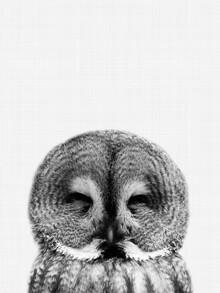 Vivid Atelier, Owl (Black and White) (Großbritannien, Europa)
