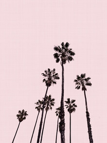 Vivid Atelier, Palm Trees in Pink (United Kingdom, Europe)