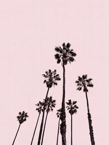 Vivid Atelier, Palm Trees in Pink (Großbritannien, Europa)